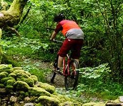 Ridgeback Mountain Bikes