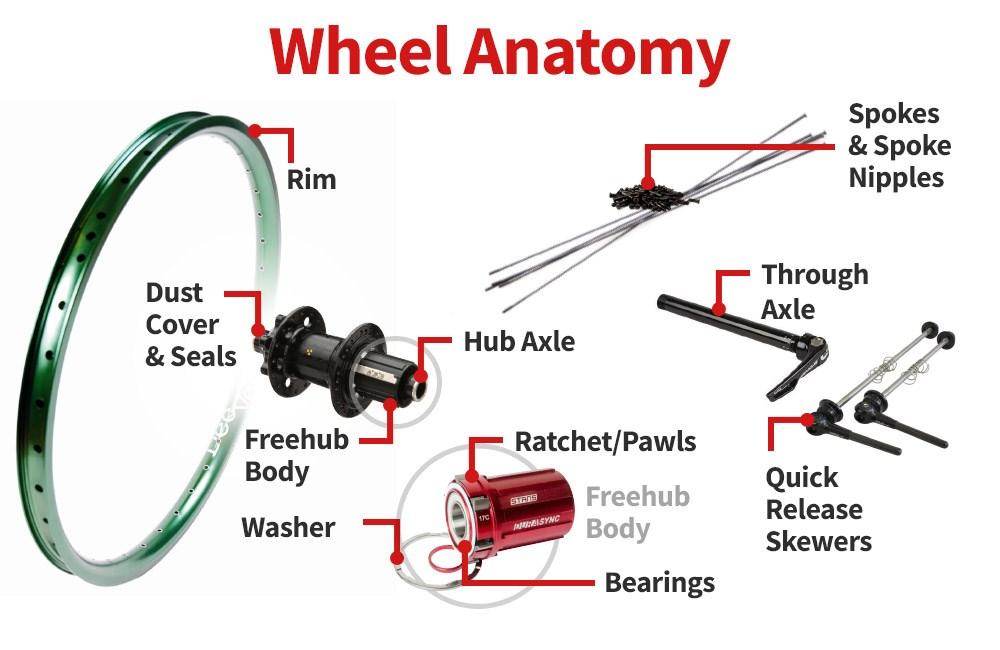 Anatomy of a wheel